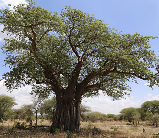Sadzenie i pielęgnacja drzew